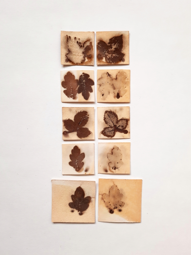 Blackberry and Oak Mini Collection, botanical contact prints on paper, approx 18 x 9 cm, 2020