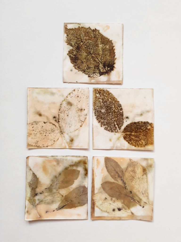 Blackberry, Sloe and Elder Collection, botanical contact prints on paper, approx 20 x 14 cm, 2020