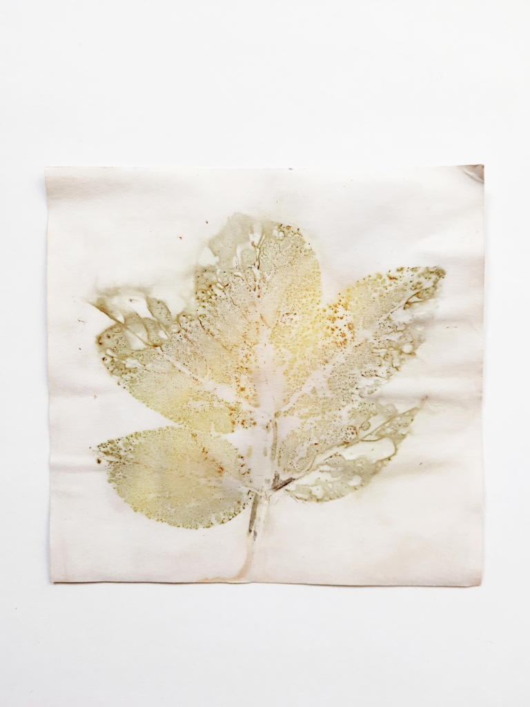 Elder Shadows, botanical contact print on paper, 15.5 x 15.5cm, 2020