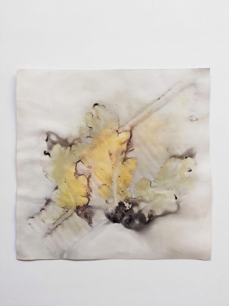 Oak Shadows, botanical contact print on paper, 15.5 x 15.5cm, 2020