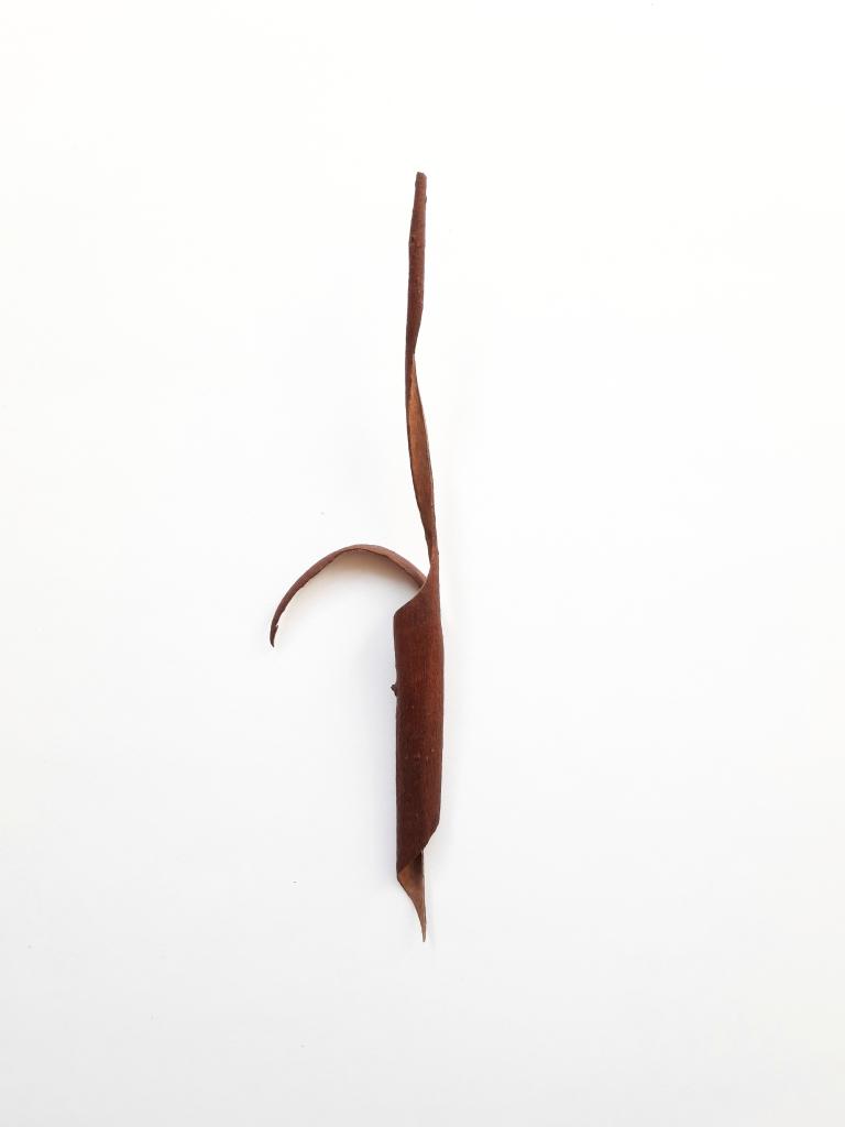 The Shape of a Walk I, dried eucalyptus bark, 25 x 7 x 2 cm, 2020