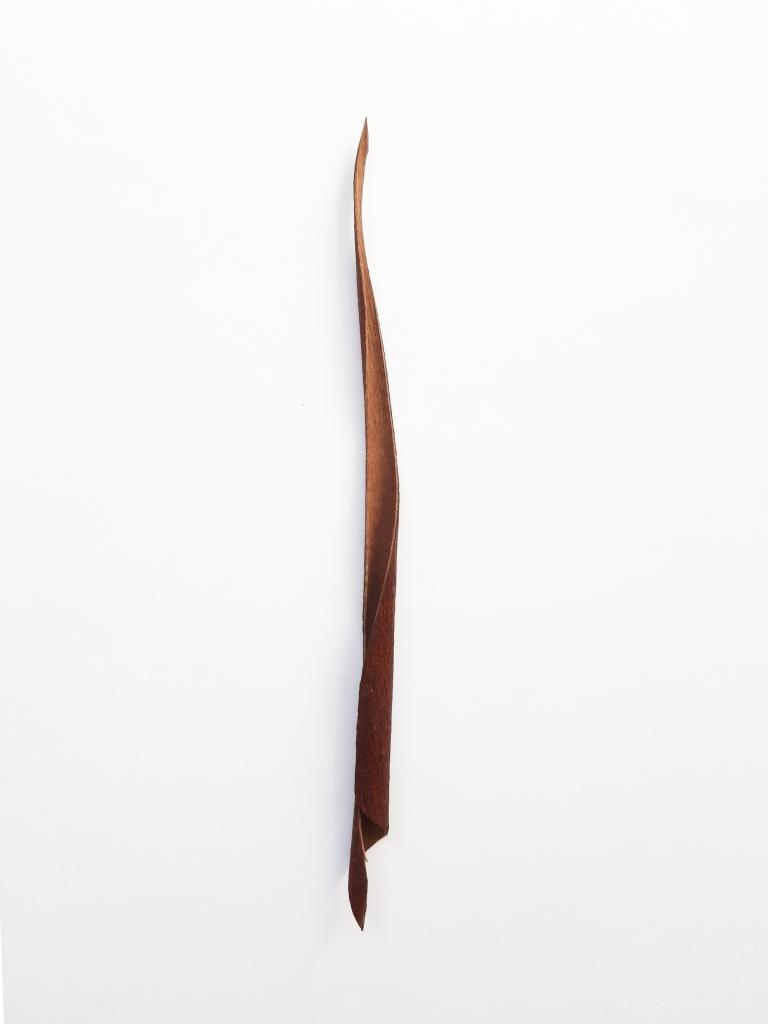 The Shape of a Walk II, dried eucalyptus bark, 25 x 2 x 2 cm, 2020