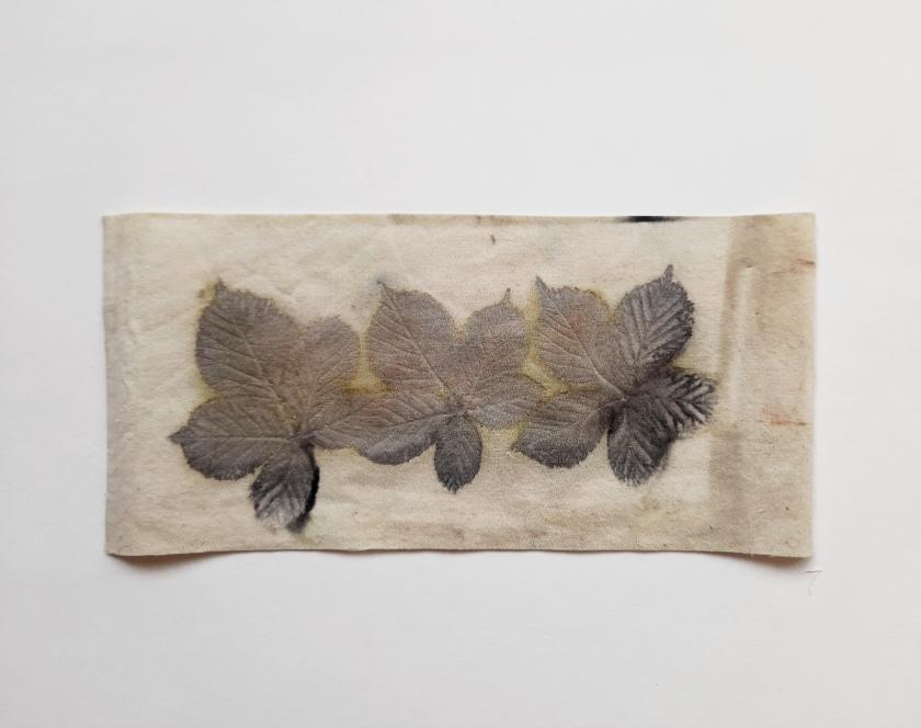 Unexpected II, botanical contact print on cotton sheet, 15.5 x 15.5cm, 2020